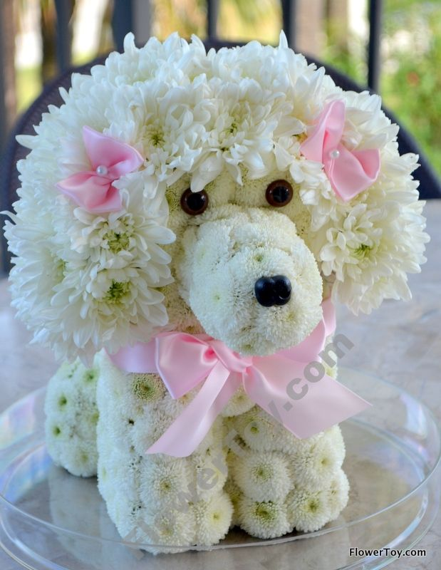 FlowerToy Poodle Dog made from Fresh Flowers! We Ship Nationwide ...