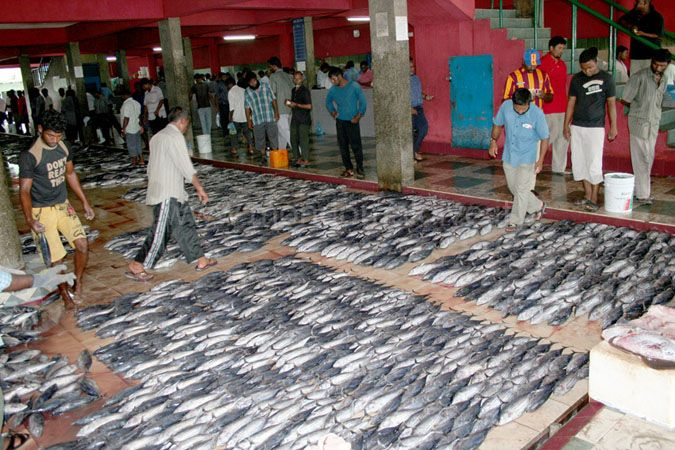 Maldives - Male Fish Market