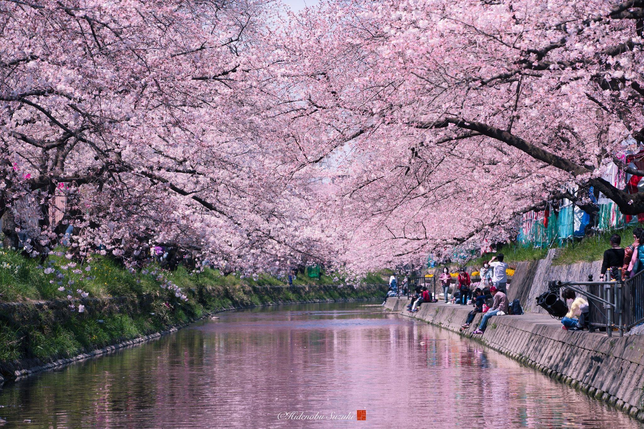 Spring Stream Spring Landscape In Japan Posted The Sakura - Calming photos of japans landscapes captured by hidenobu suzuki