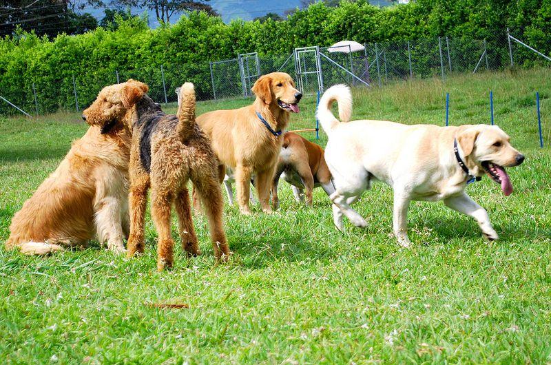 Muchas razas en Dogs Resort