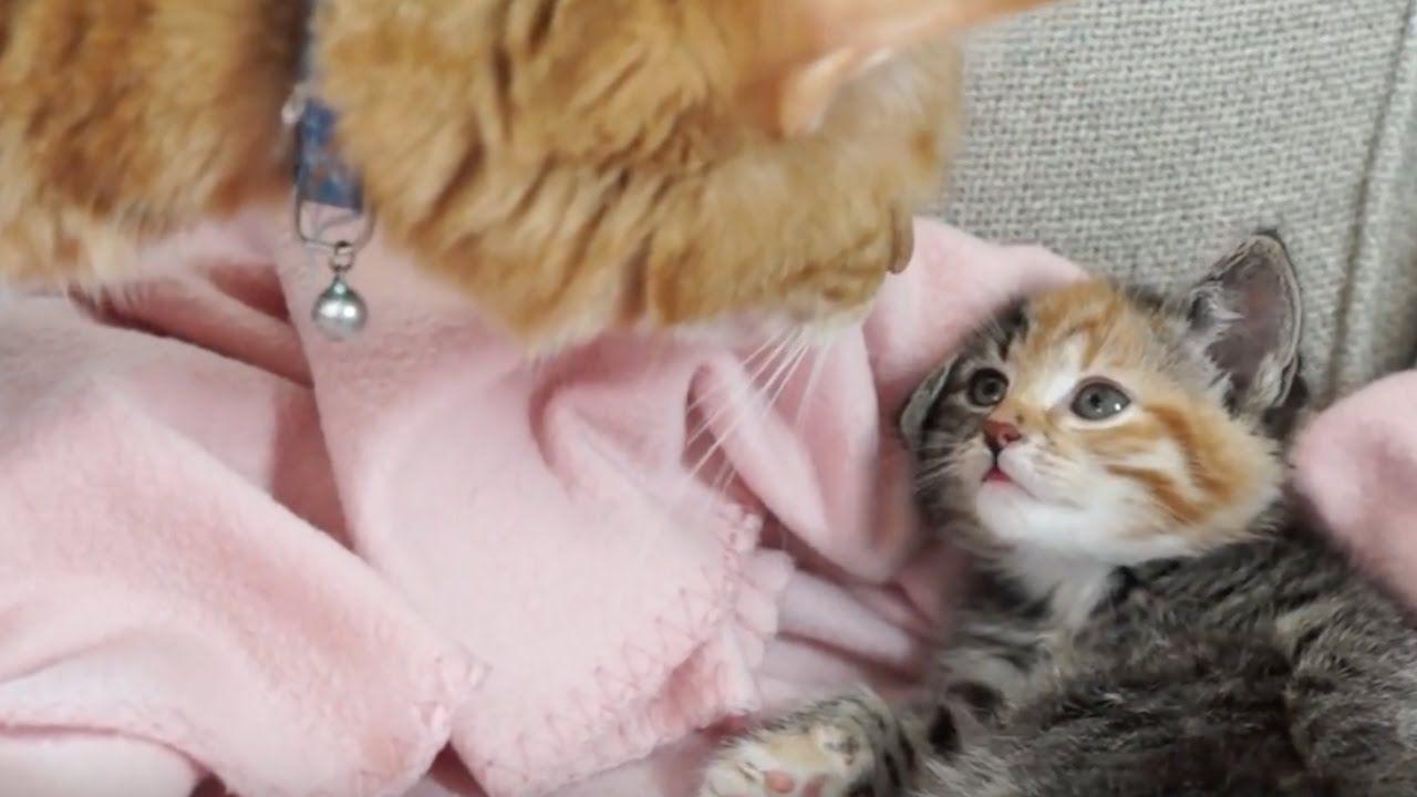 Cutenessoverload Little Maci And Casper So Happy Together Kittens Cutest Casper Happy Together