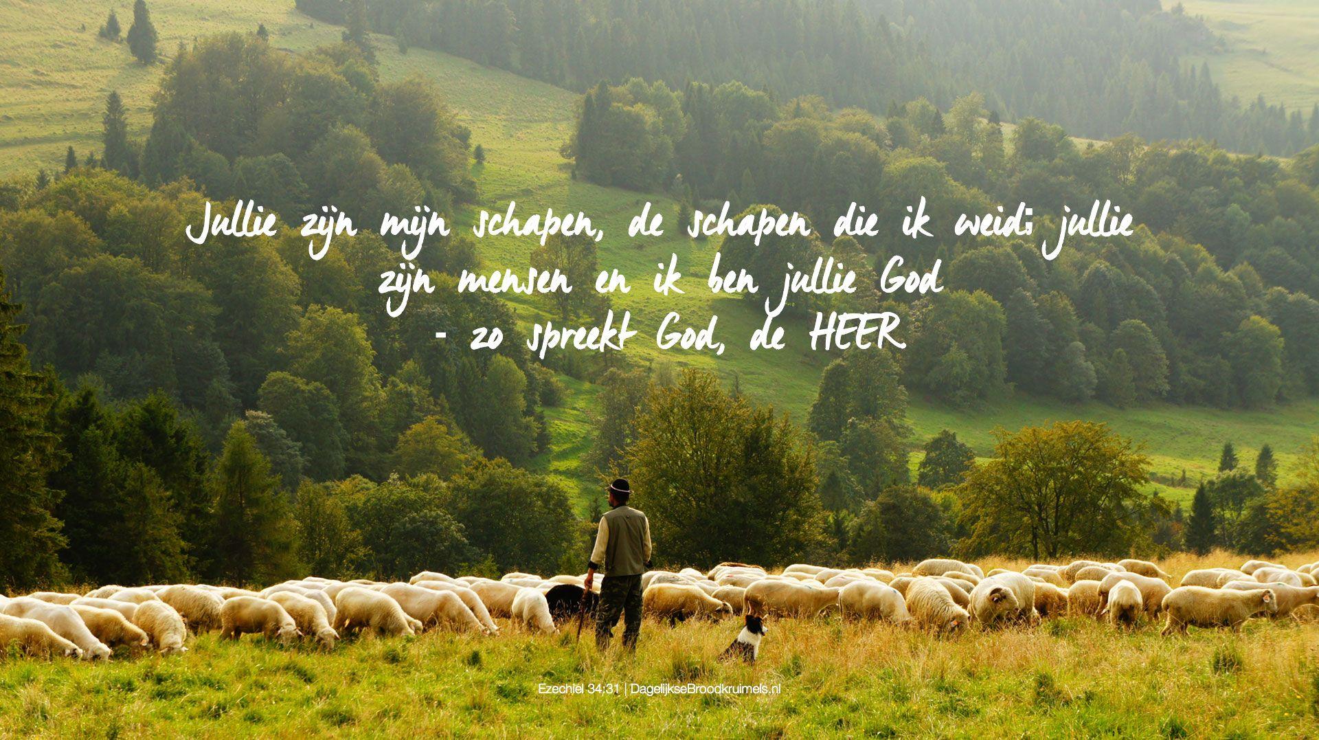 Jullie zijn mijn schapen, de schapen die ik weid; jullie zijn mensen en ik ben jullie God – zo spreekt God, de HEER. Ezechiel 34:31  #Geloof, #God, #Herder, #Schapen  http://www.dagelijksebroodkruimels.nl/ezechiel-34-31/