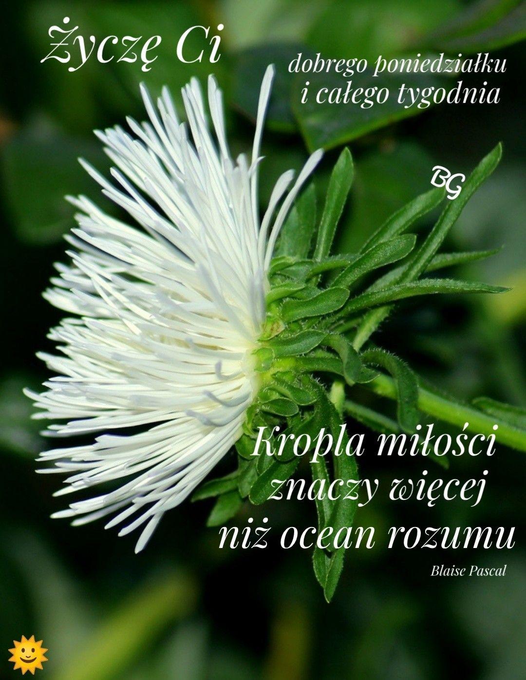 Pin By Elzbieta Baranowska On Cytaty Zyciowe Herbs Dandelion