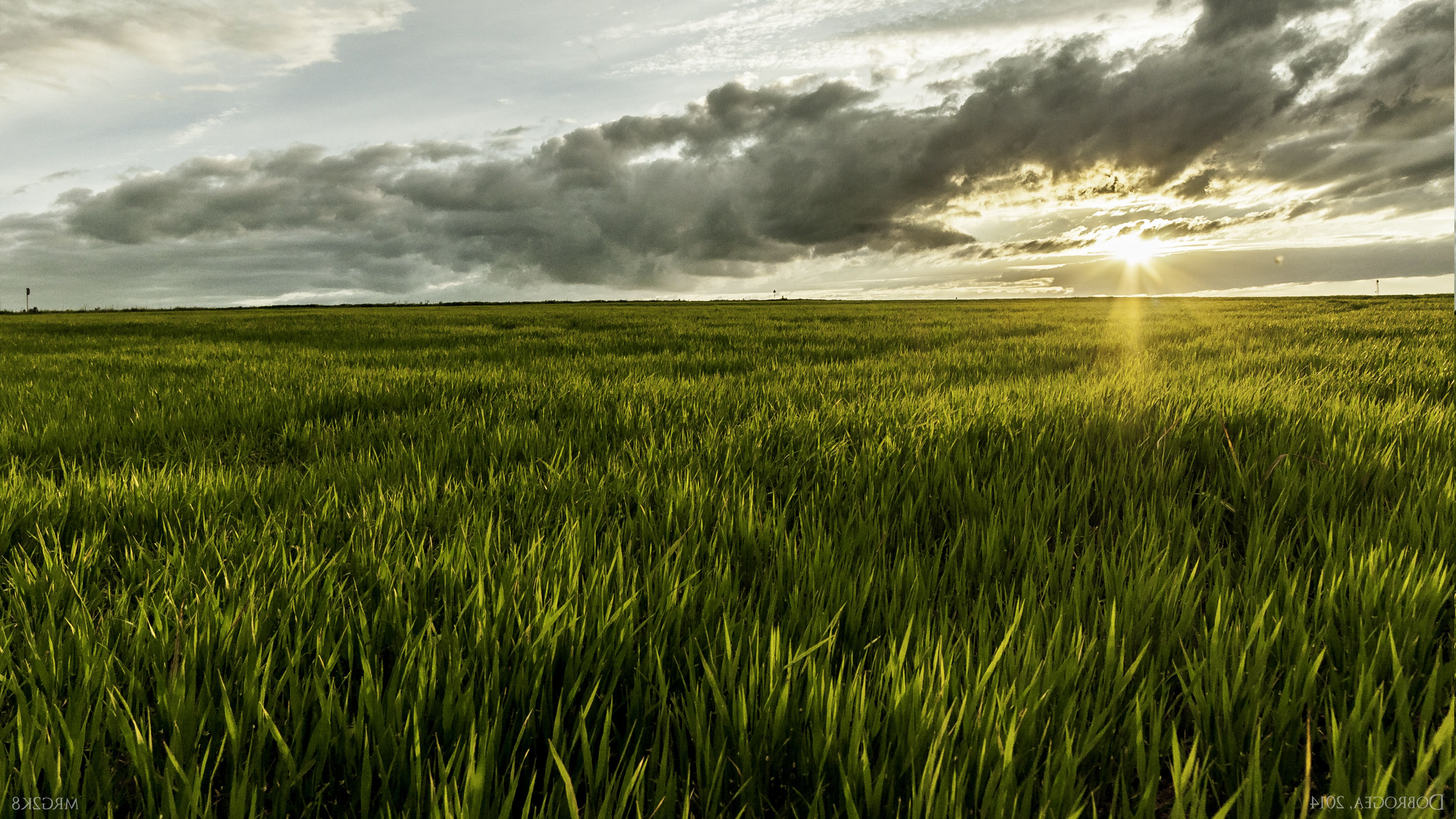 Grass Sunlight Romania Landscape Nature Field Wallpapers Hd Field Wallpaper Desktop Wallpaper Macbook Landscape