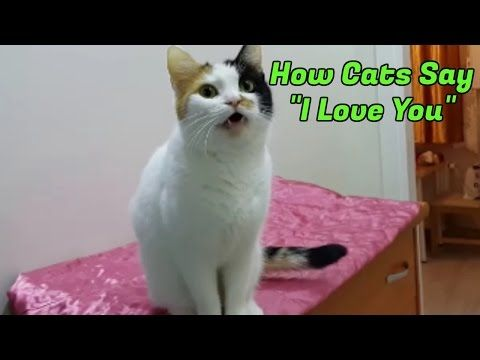 (79) 10 Signs Your Cat Loves You - YouTube