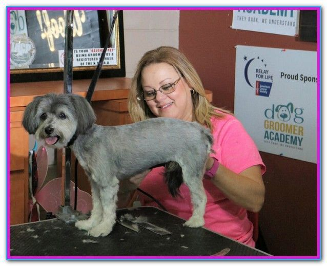 Dog Grooming Certification Bc Our Dog Grooming Courses Offer