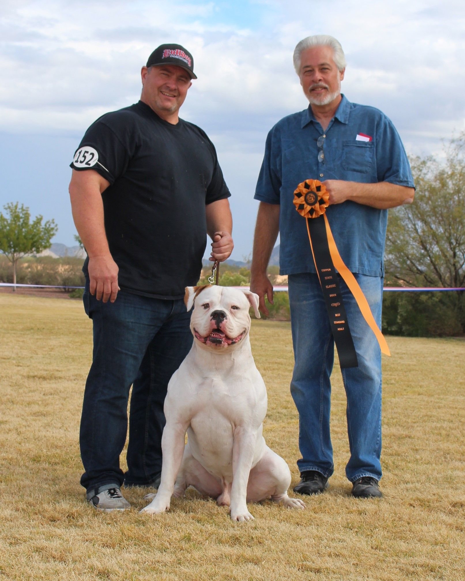 Full White American Bulldog American Bulldog American Bulldog