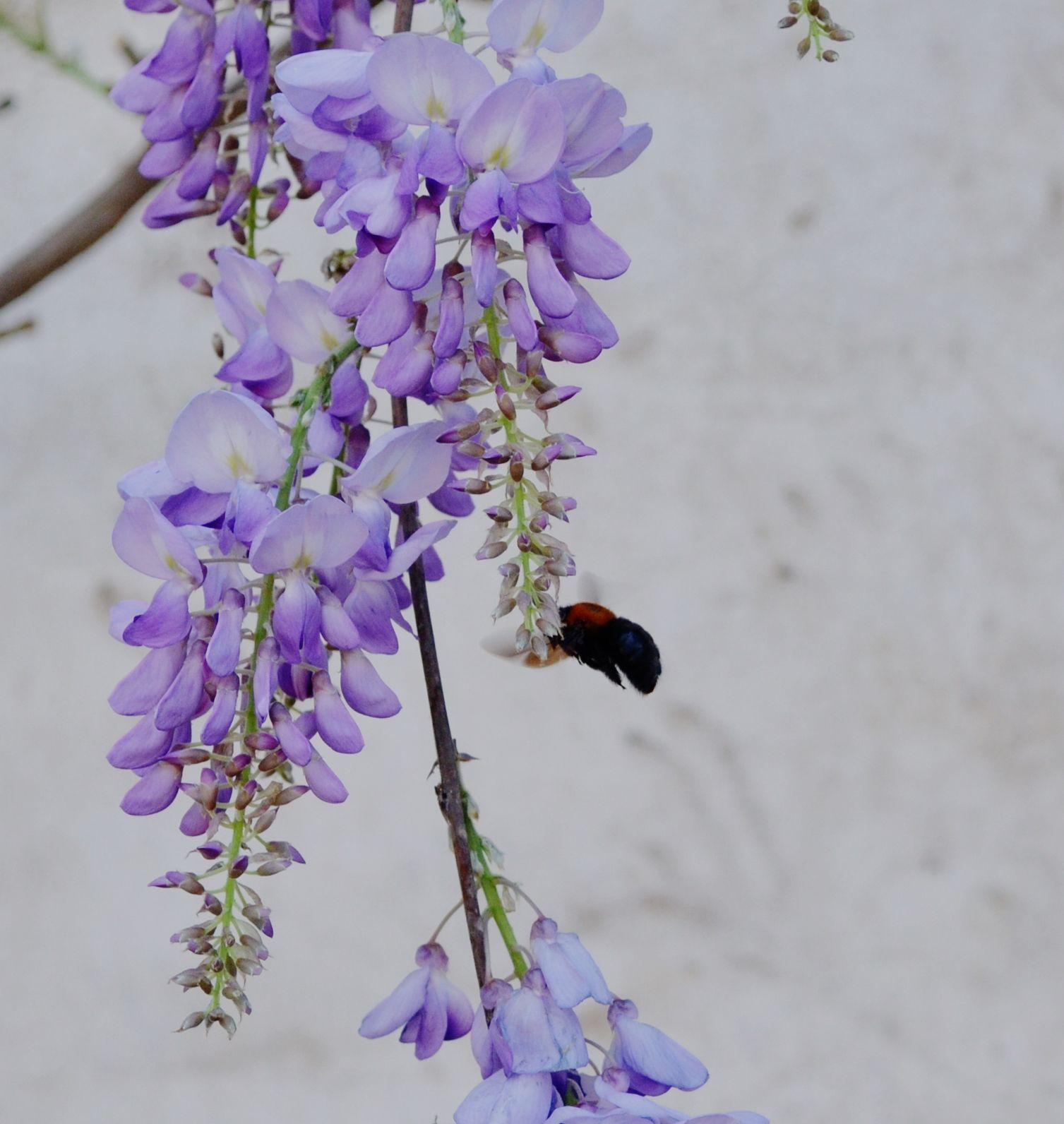 abejorro del 21