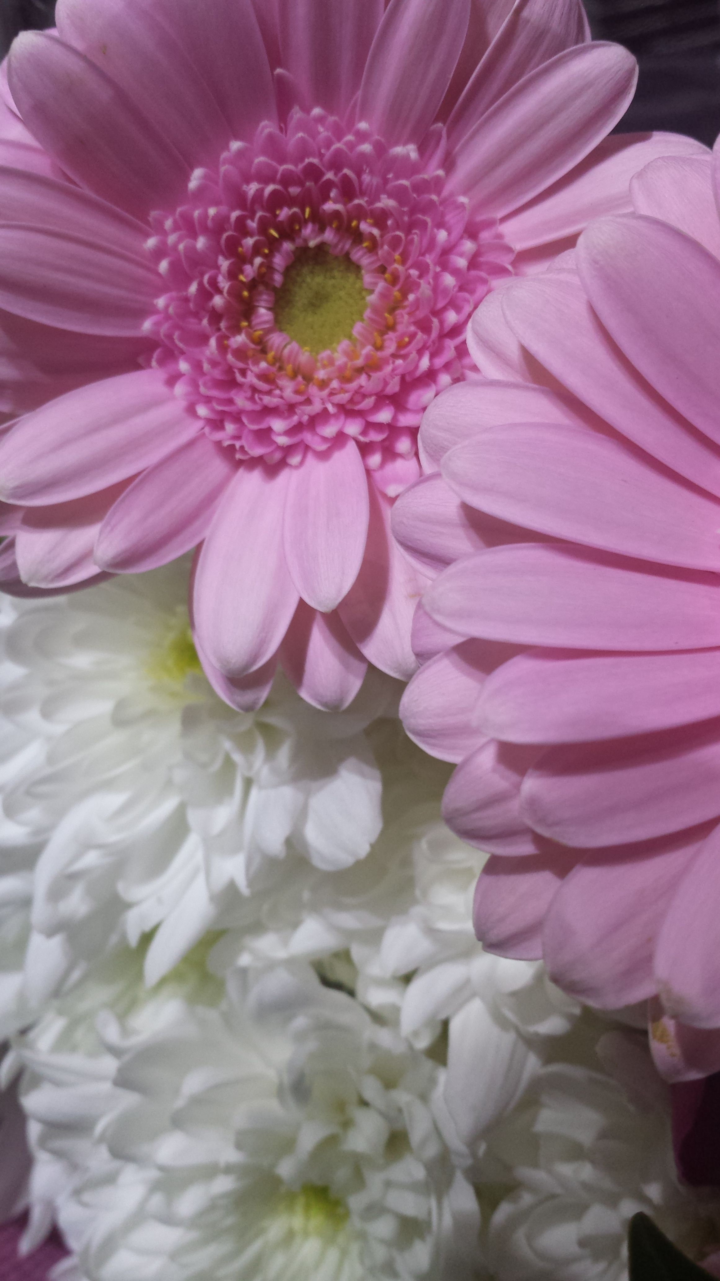 TriedForFree Tesco - Belle Bouquet MOTHERS DAY | Tesco products ...