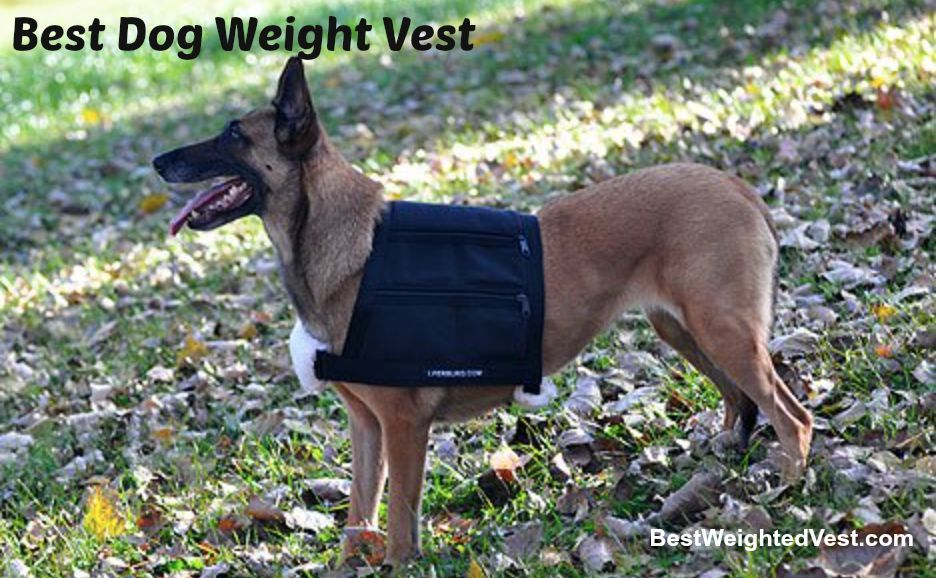 Best Dog Weight Vest The Ultimate Guide Dog Vest Dog Weight