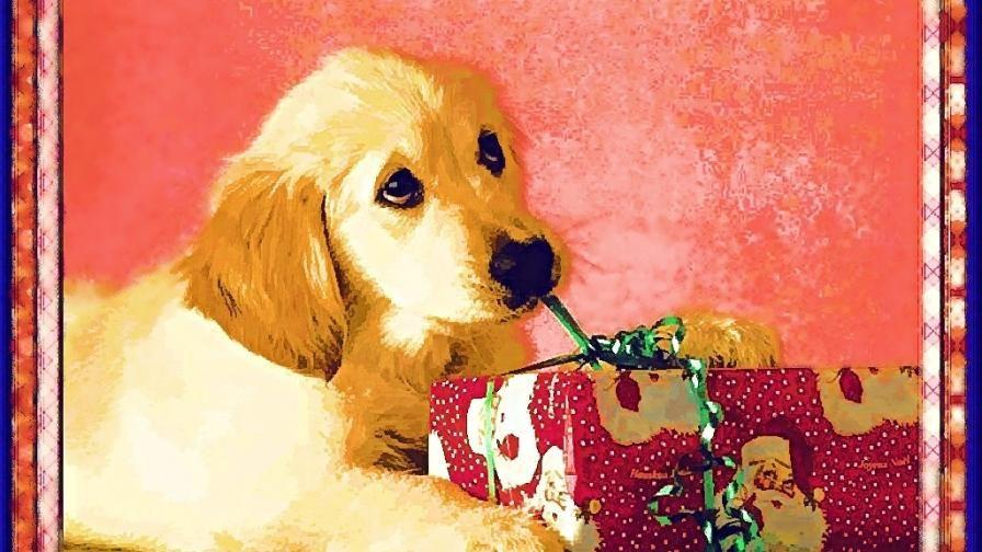 Christmas Dog Painting Christmas Wallpaper Free Christmas Dog Christmas Wallpaper