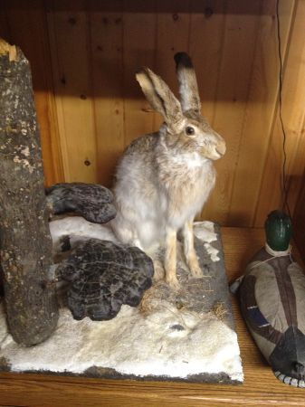 75 And What The Heck Is Wrong With It S Face Bad Taxidermy