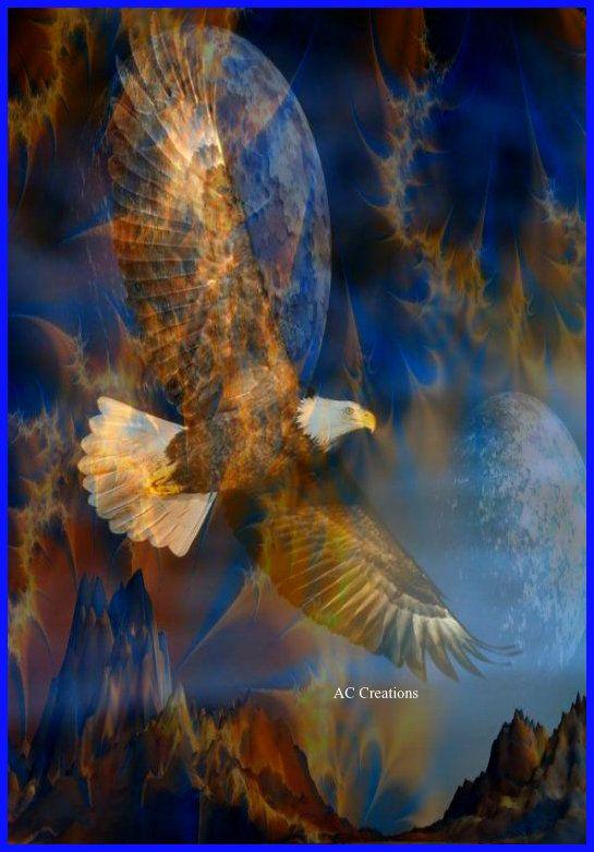 Beautiful soaring eagle