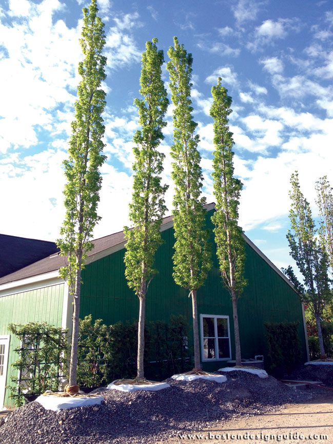 Select Horticulture Inc Premium Plant Material In Lancaster Ma Horticulture Plants Boston Design