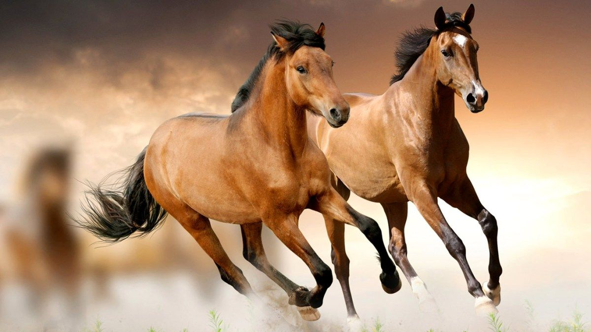 Wild Horses Wallpapers Hd 1366x768 Free Wallpapers For Pc Desktop Horse Wallpaper Horse Pictures Horses