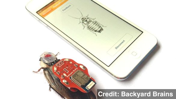 Smartphone-Controlled Cockroaches Could Unlock Brain Secrets | June 12, 2013