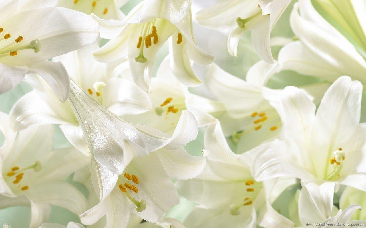 Http Purplepaperplanes Files Wordpress Com 2013 08 White Lilies Jpg Lily Flower White Flower Wallpaper Lily Wallpaper