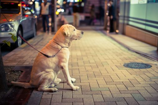 Why You Shouldn T Leave Your Dog Tied Up Outside A Store Dog Tie