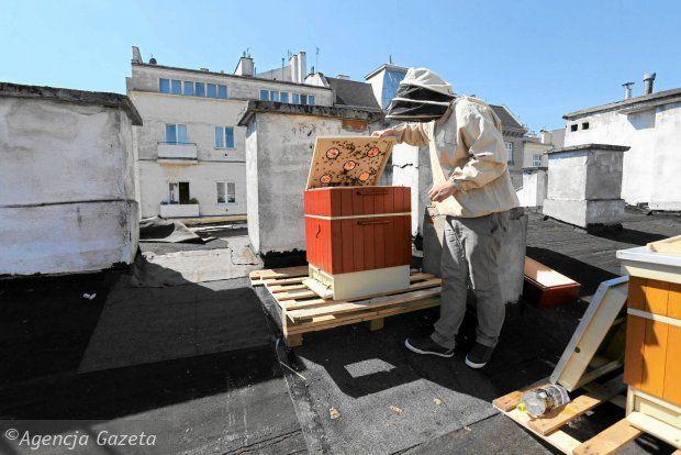 Hodowla Pszczol W Warszawie Z Miejskiej Partyzantki Wlasnie Stala Sie Legalna W Czwartek Rada Miasta Przeglosowala Poprawki W Mi Urban Beekeeping Urban Warsaw