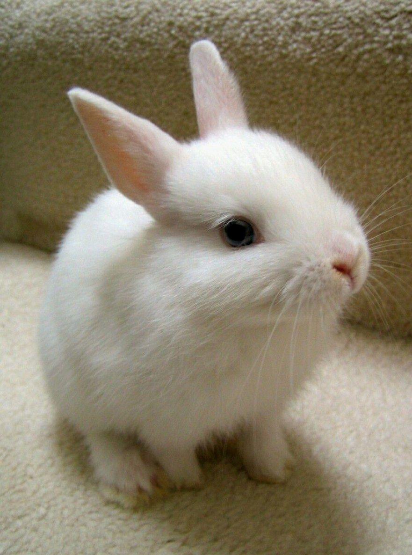 GoodLooking rabbit Cute baby bunnies, Cute little animals