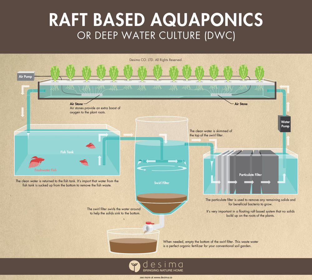 Different types of aquaponic systems aquaponics deep for Hydroponic raft system design