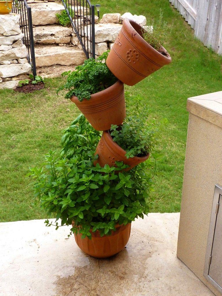 Tips for growing herbs garden pinterest growing herbs herbs tips for growing herbs workwithnaturefo