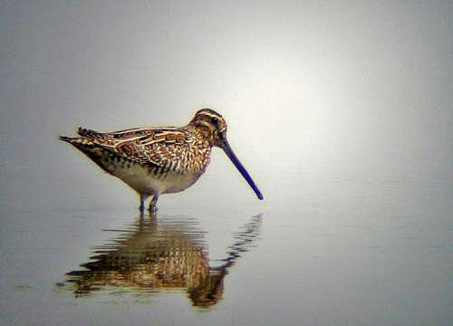 Birdingalbufera Es El Observatorio De Aves En L Albufera De