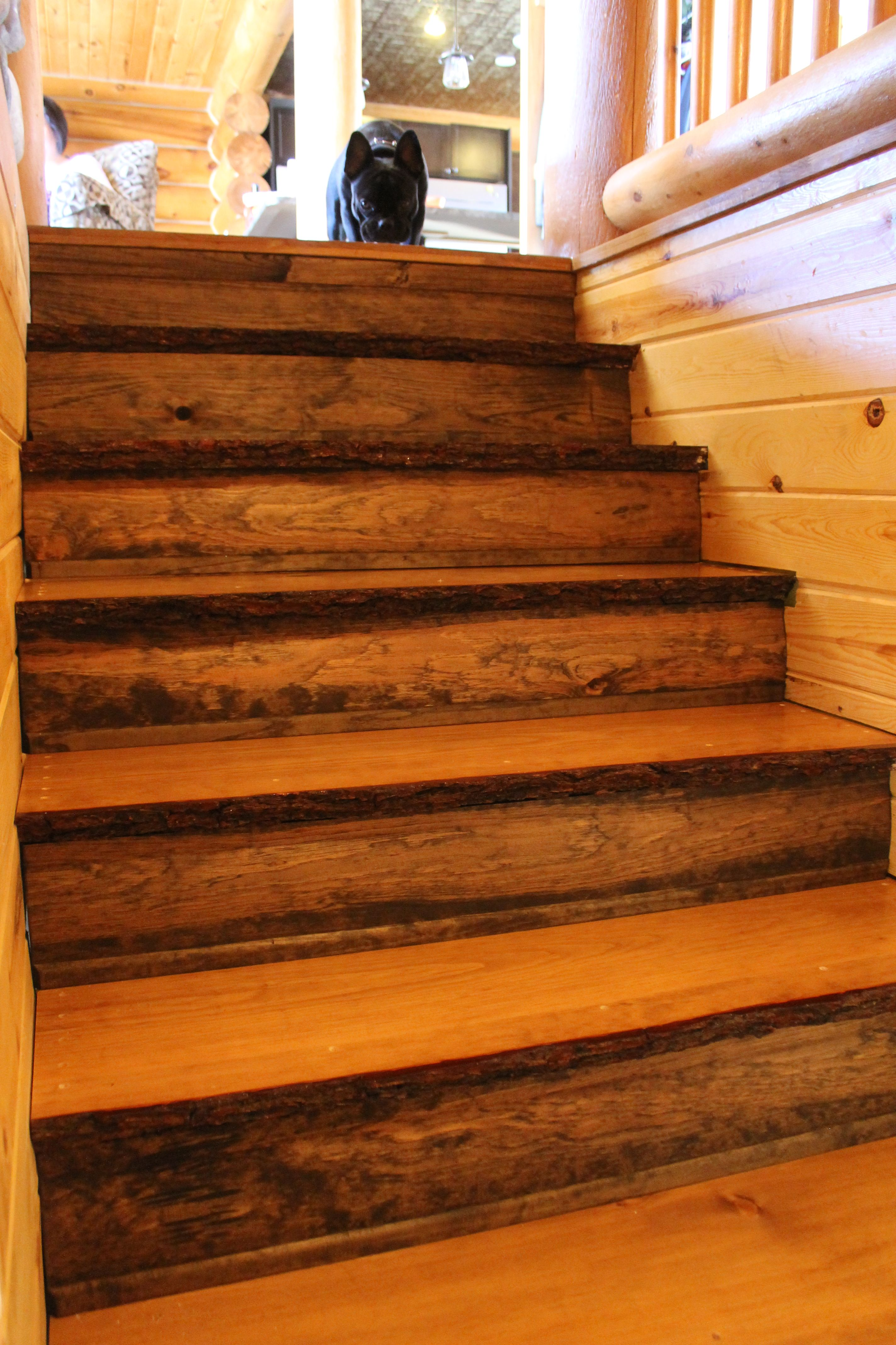 Natural Edge Pine Stair Treads With Log Profile Siding Used As Risers.