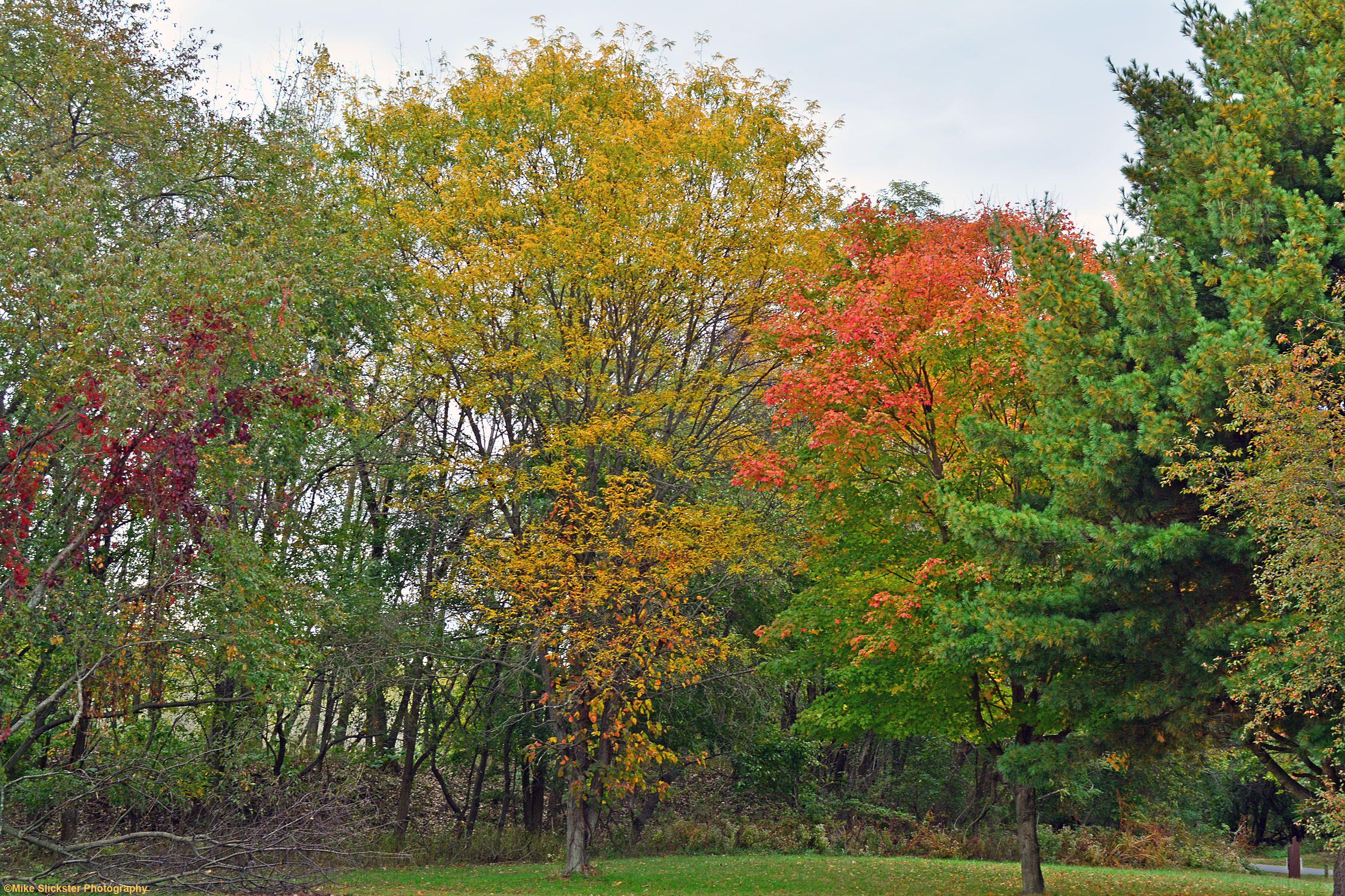 Fall colors for 25th October 2017at Neshaminy Marina. | Plants ...