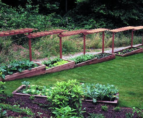 Thinking of grapes and shade plants underneath, raised garden beds with trellis on slope North to South