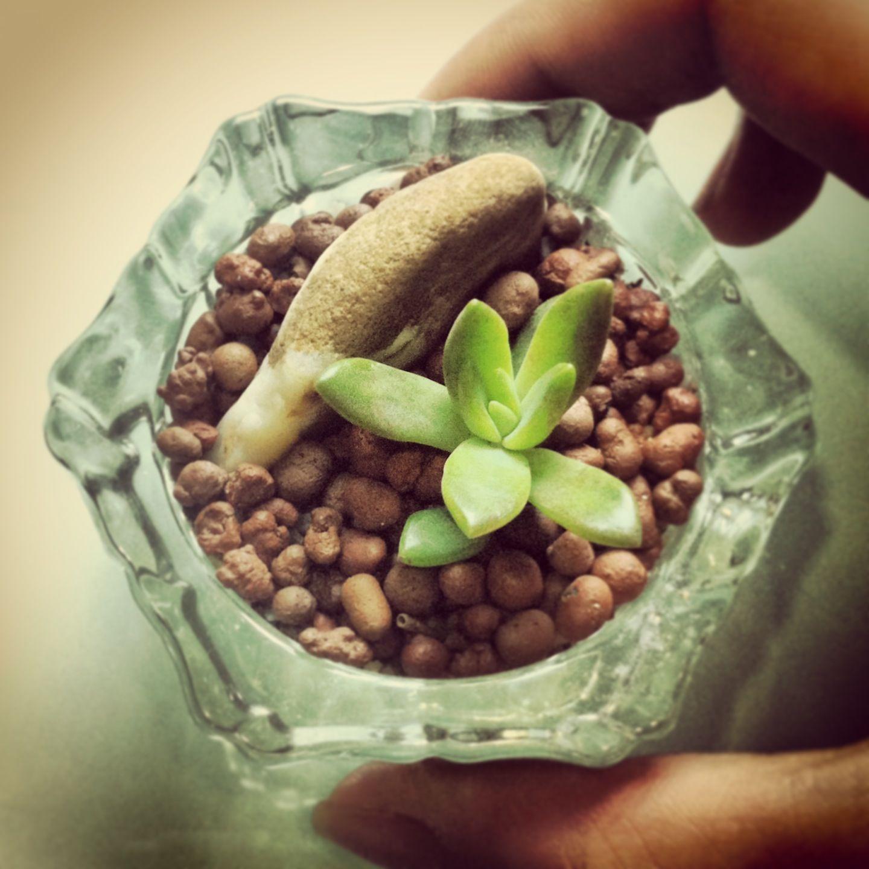 mini terrarium  #nualnualgardening