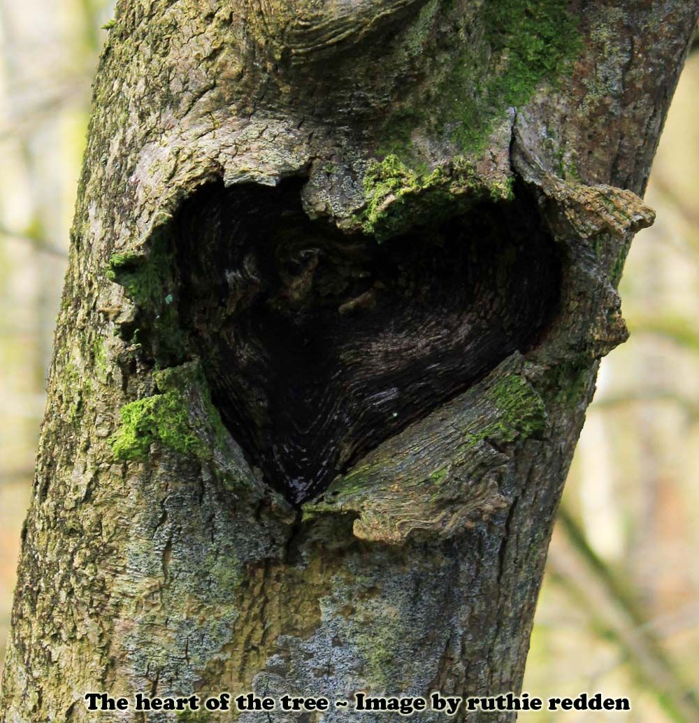 The heart of the tree - image by Ruthie Redden
