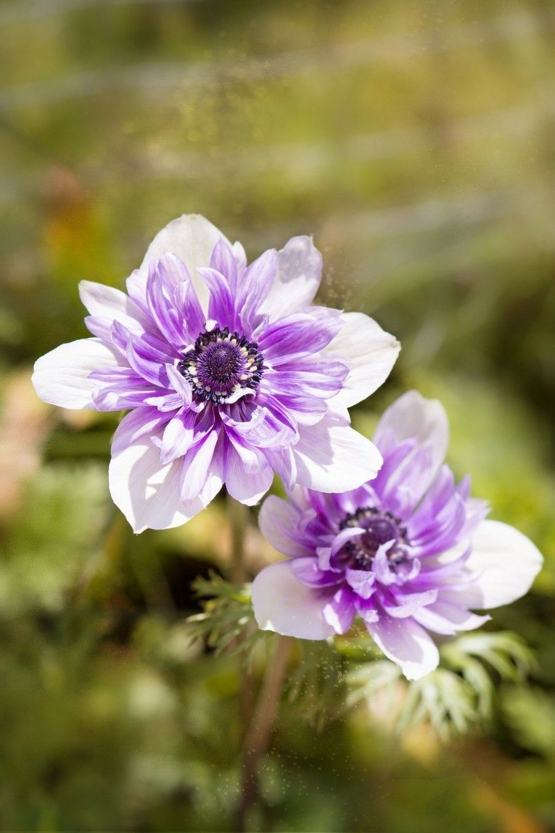 Top 10 Of The Most Beautiful Spring Flowers Flower Power In 100