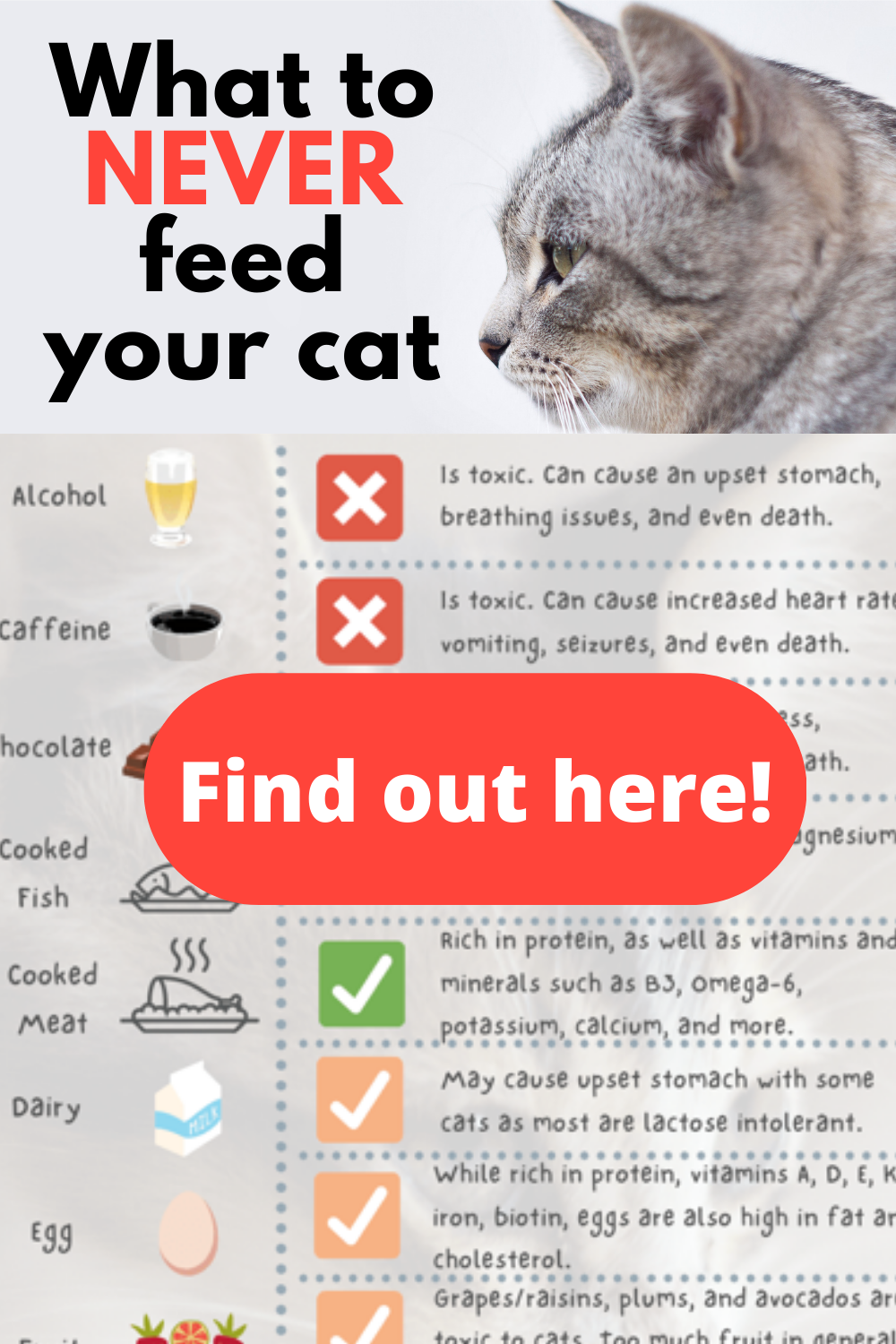 What Human Foods Can Cats Eat Human Food What Can Kittens Eat Sick Cat