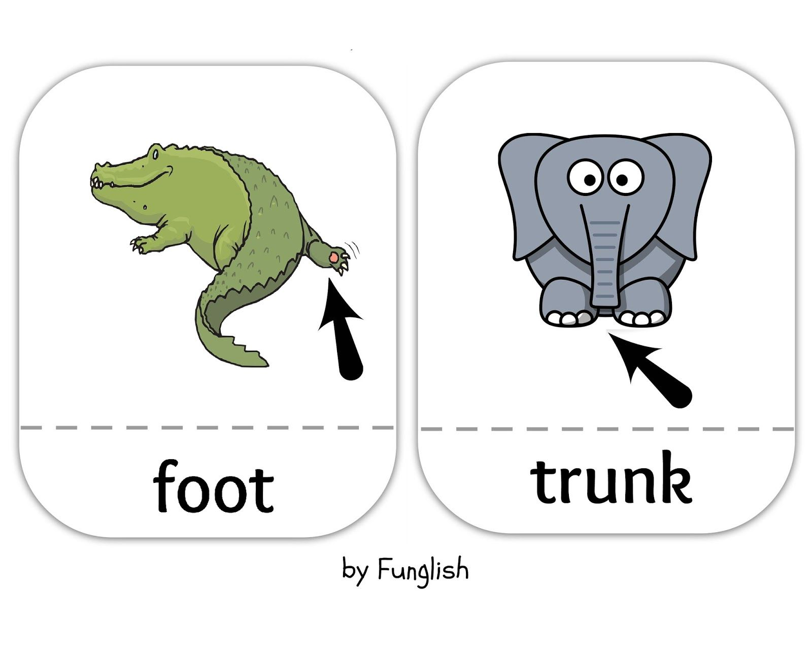 Animals Wordcards Flashcards Animal Body Parts Young Learners Body Parts