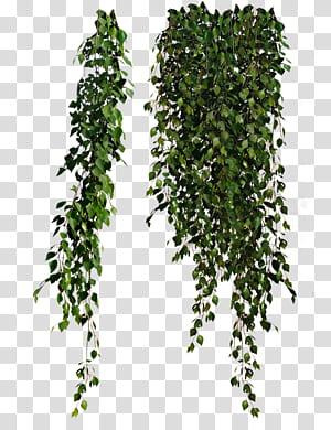 40+ Leaf vine png clipart ideas