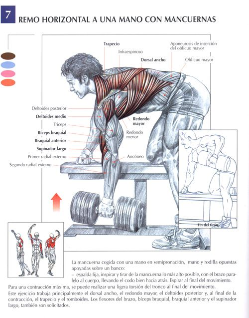 Remo Con Mancuerna Jpg 500 637 Gym Workout Tips Weight Training Workouts Muscle Fitness