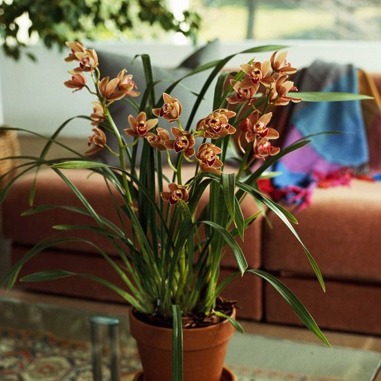 15 Easy Care Orchids Anyone Can Grow Blooming Orchid Cymbidium Orchids Orchid Flower