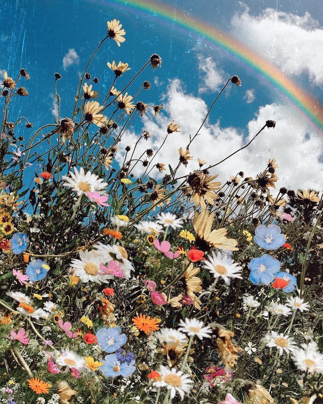 The Boho Legend On Instagram Heavy Dose Of Wildflowers And Rainbow For Everyone Today Flower Aesthetic Sunflower Wallpaper Aesthetic Iphone Wallpaper