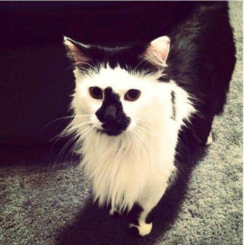 I love his fur