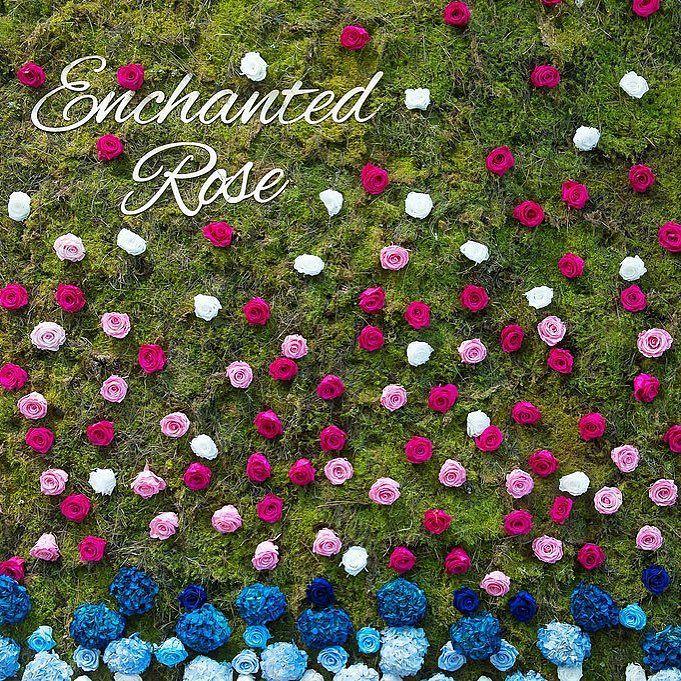 Flower Wall #flowerwall #enchantedrose by northsideflowermarket