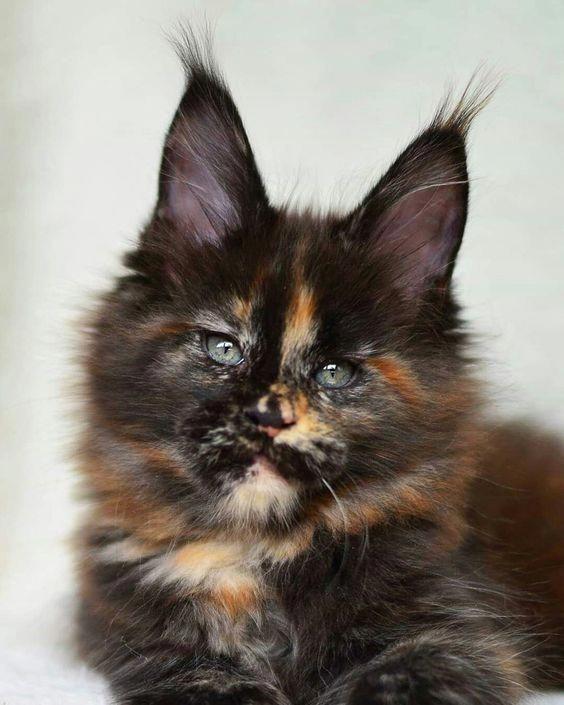 Cats Craigslist DoesCatsHaveNightVision Key 9255558554