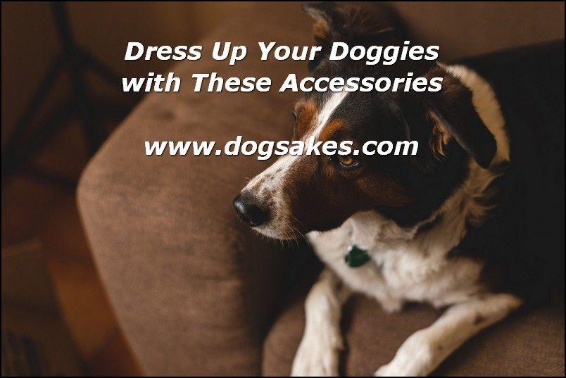 Info's : Dog Clothing Shopping Tips - Dog Sakes