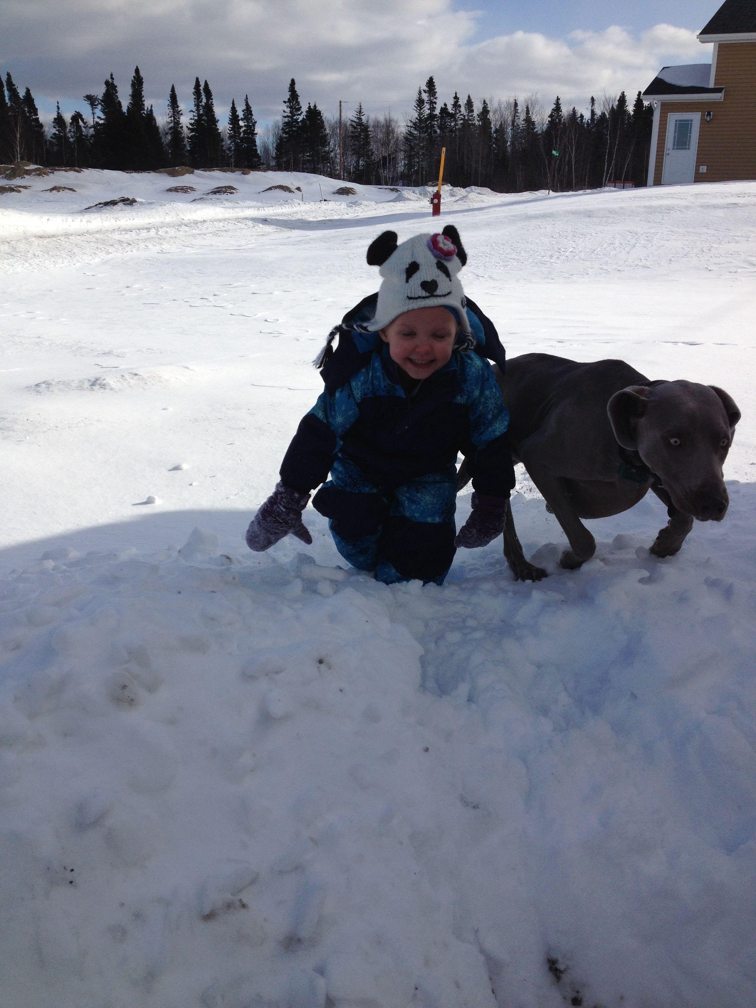Weimaraner enjoying the snow with little girl