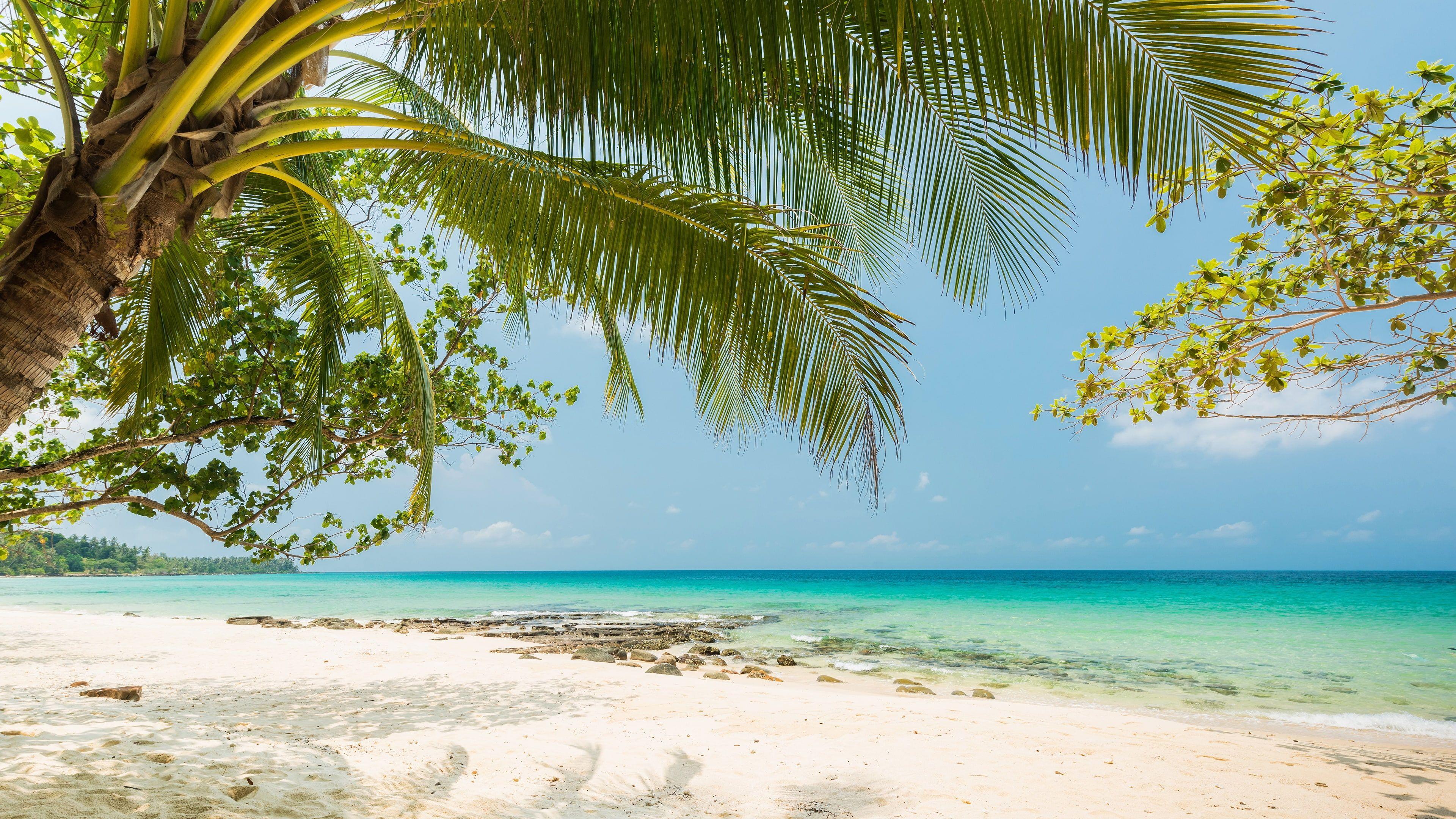 Pin On Beach Tropical island beach palm sea sand
