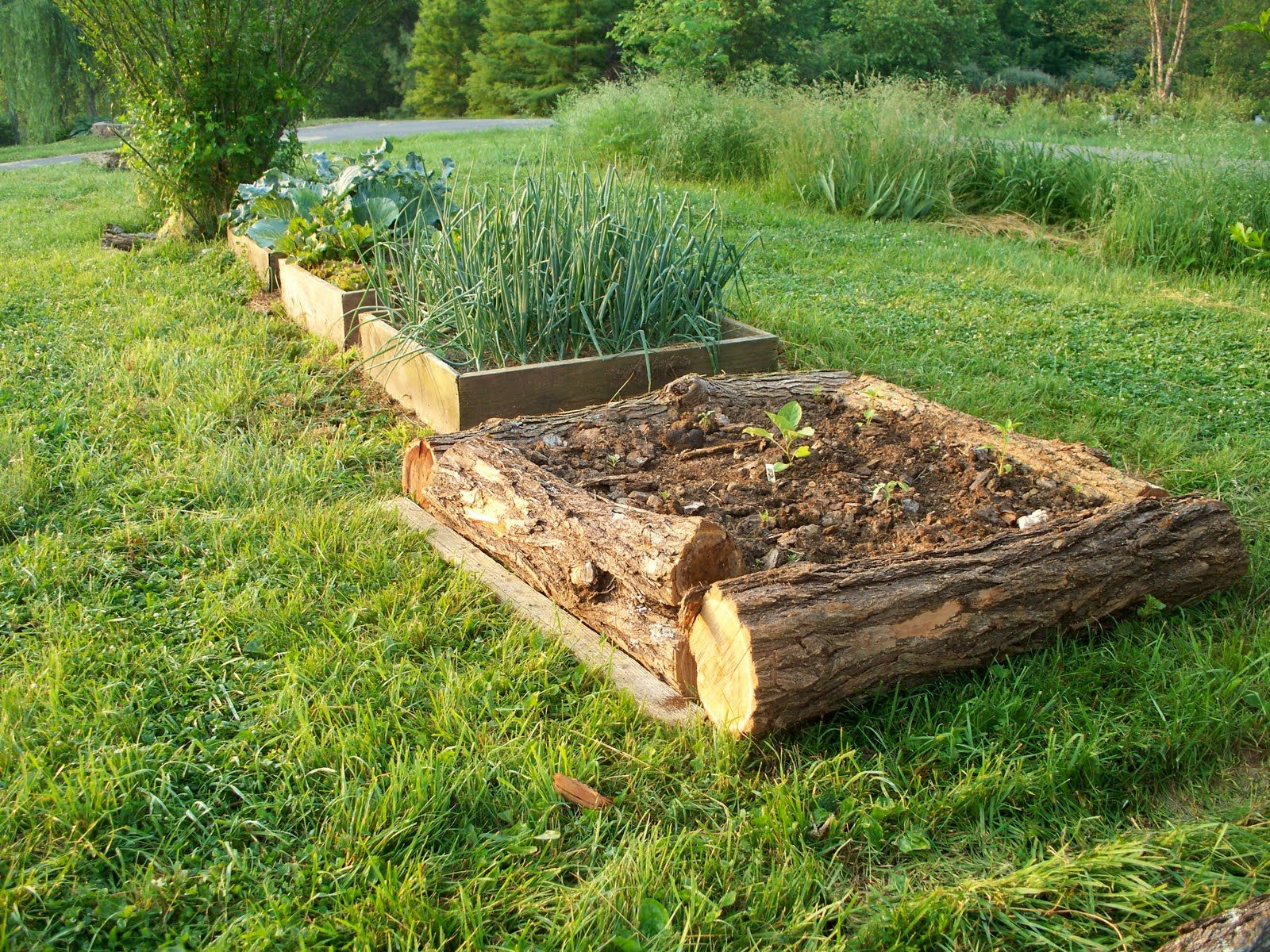 Rough hewn logs provide walls for a raised bed while blending in