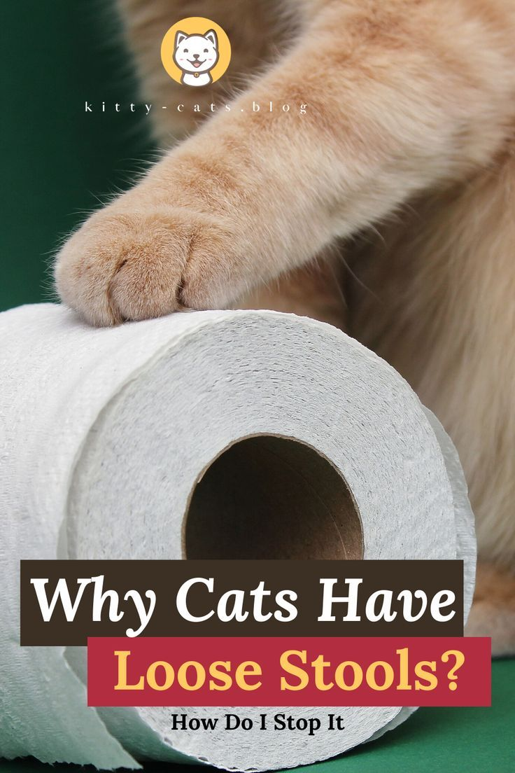 Why Cats Have Loose Stools Is It Serious And How Do I Stop It In 2020 Cat Health Signs Digestion Problems Cat Health