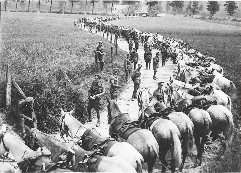 Men and horses of the 2nd Dragoons (Royal Scots Greys), in August