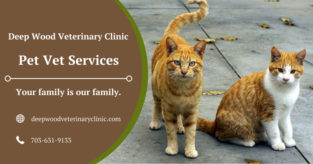 Deepwood Veterinary Clinic Is The Best Pet Vet Services Provider