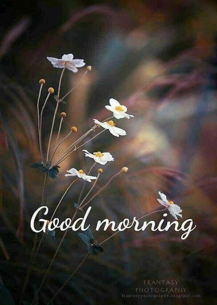 Pin By Swee On Morning Good Morning Nature Good Morning Beautiful Images Morning Pictures